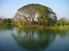 laos_tree_water